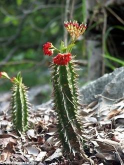 blooming_cactus.jpg